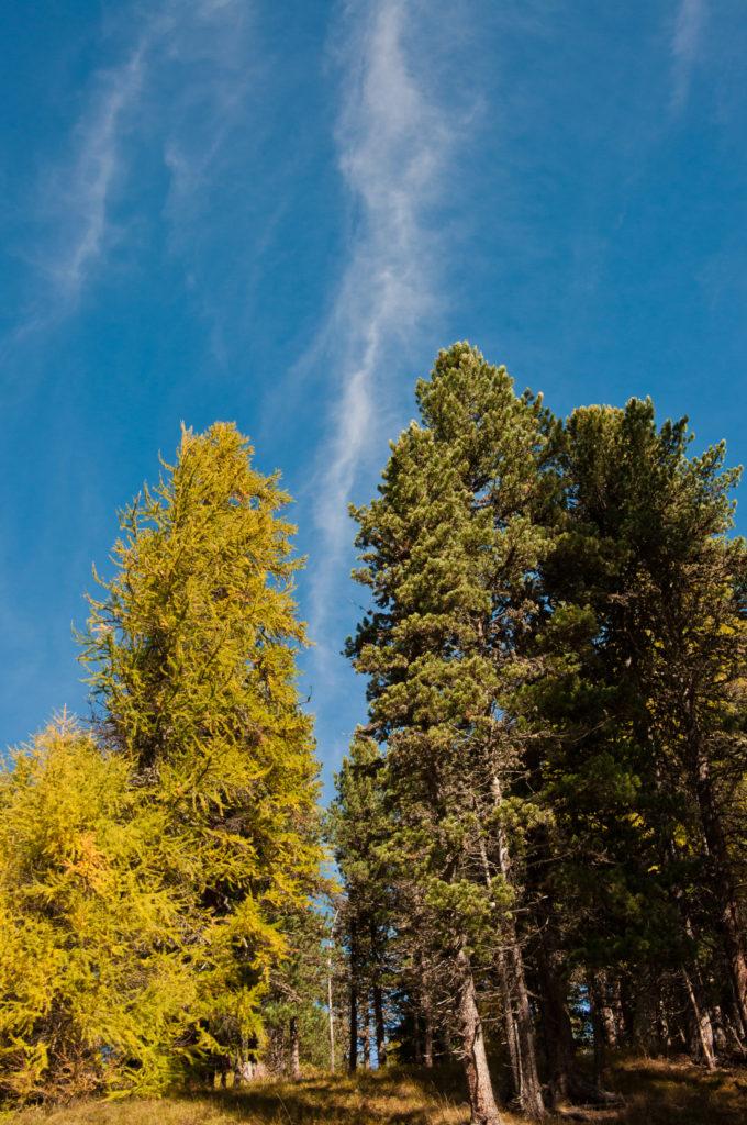 _THEMES, autumn, clouds, fall, forrest, herbst, himmel, jahreszeiten, landscape, landschaft, natur, nature, season, sky, wald, wolken