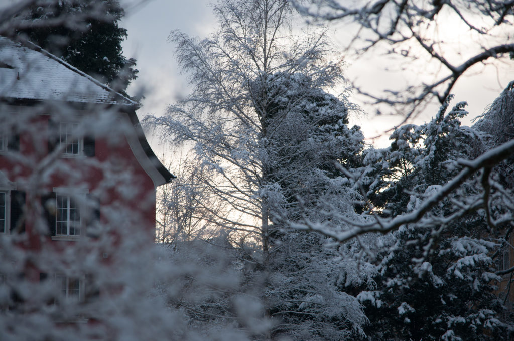 Europa, Kanton Schaffhausen, Nordostschweiz, Schaffhausen, Schweiz, _THEMES, natur, nature, schnee, sh, snow