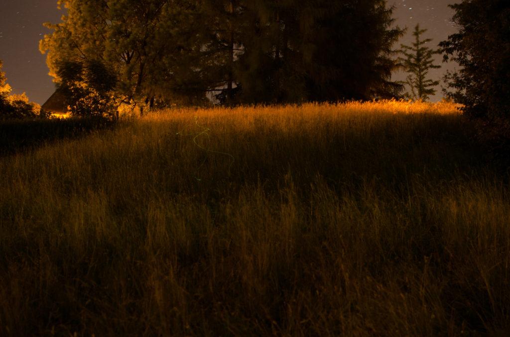Europa, Kanton Schaffhausen, Nordostschweiz, Schaffhausen, Schweiz, _THEMES, animal, fireflies, glühwürmchen, insects, insekten, natur, nature, sh, tier