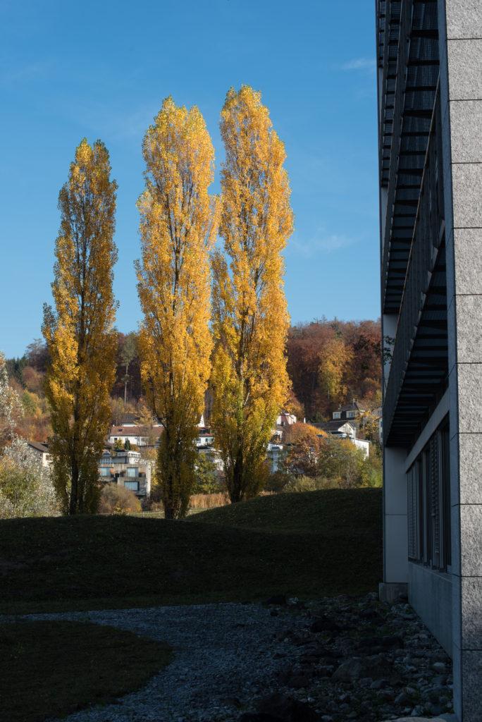 Drei Herbstliche