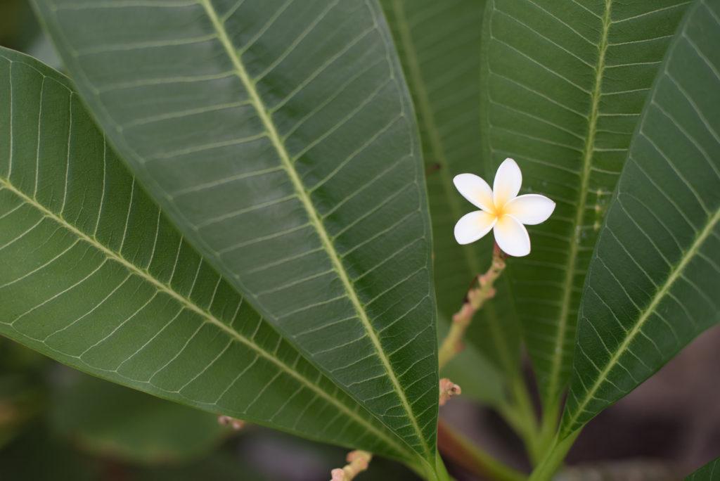 Kleiner Blütenzauber
