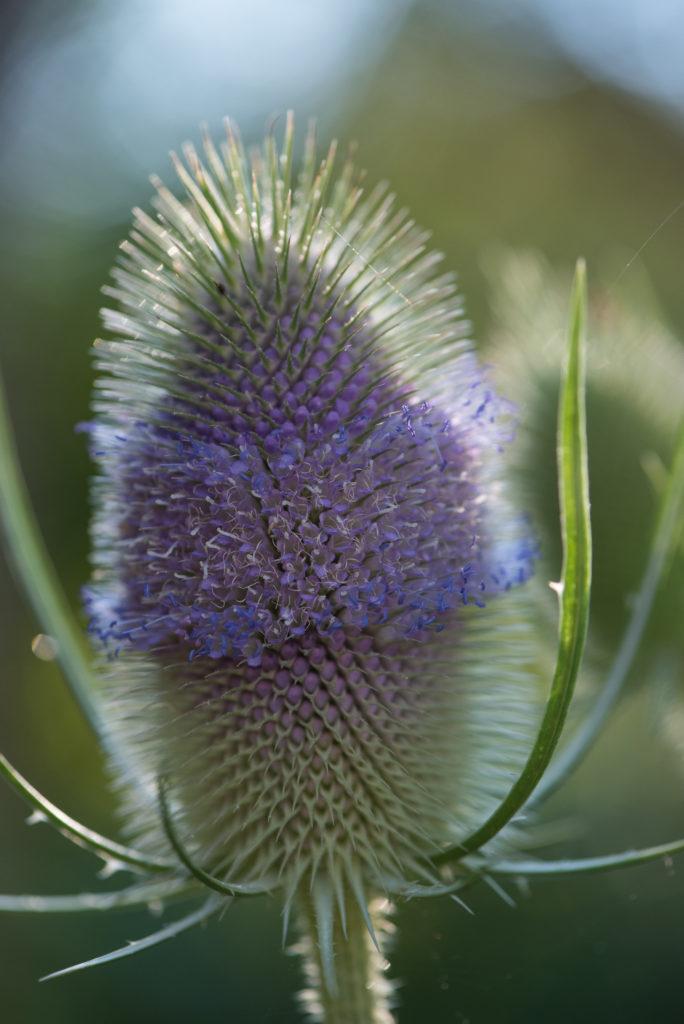 _THEMES, blume, flower, macro, makro, natur, nature, pflanzen, plants