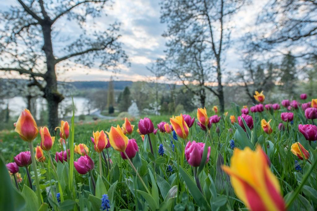 Baden-Württemberg, Deutschland, Europa, Germany, Insel Mainau, Konstanz, Mainau, _THEMES, ausflug, excursion, frühling, jahreszeiten, on the way, season, spring, trip, unterwegs, zeit mit sabrina