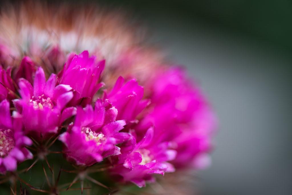 Jahreszeiten, blumen, flowers, frühling, natur, nature, pflanzen, plants, spring