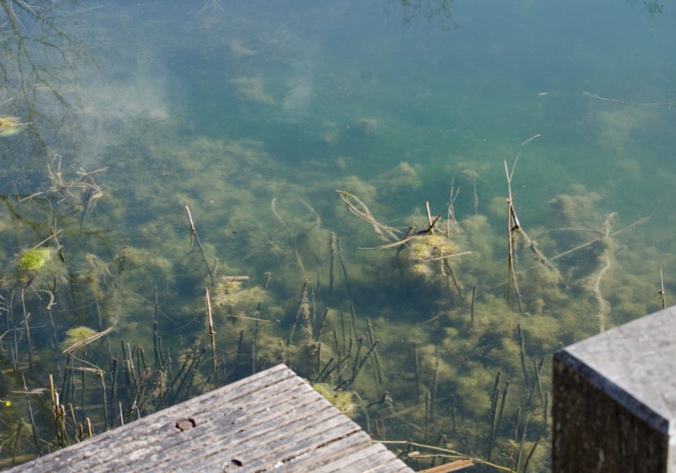 Teichwelt